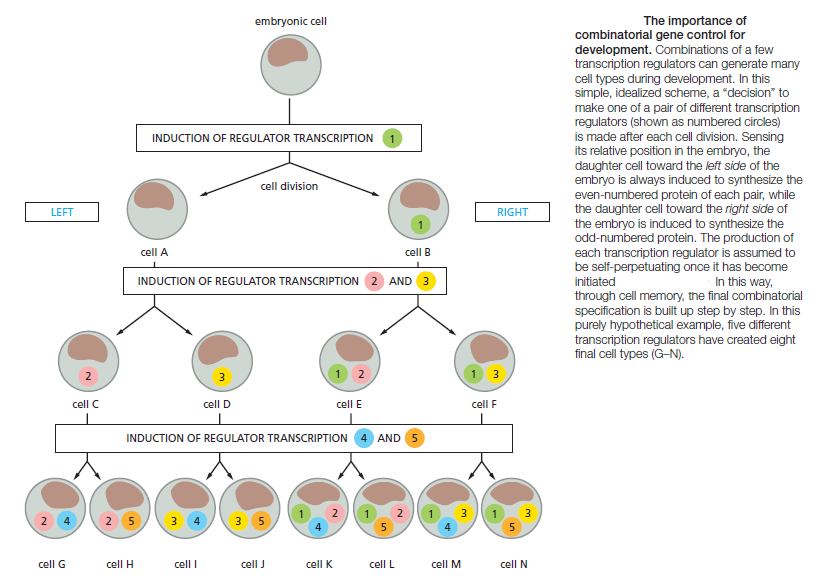 Unicellular and multicellular Organisms are best explained through design Combin10
