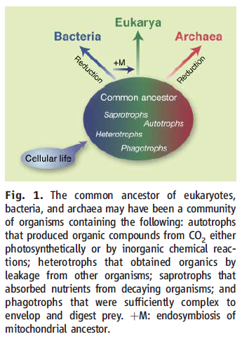 Eukaryotic cells, and their origin Common10