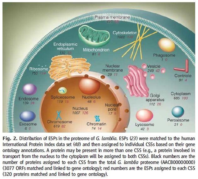 Eukaryotic cells, and their origin Distri10