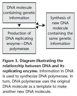DNA replication of eukaryotes  Dna_in10