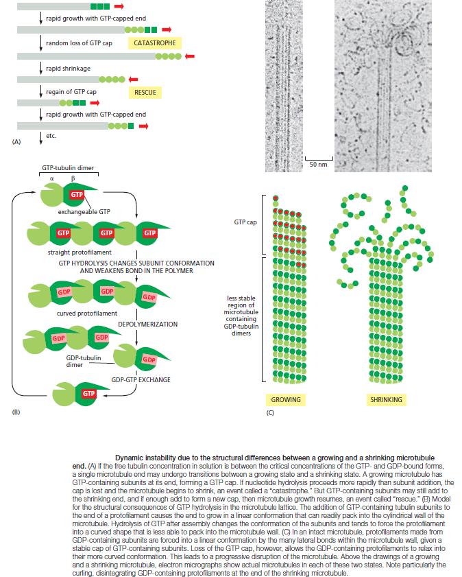 The astonishing  language written on microtubules, amazing evidence of  design Dynami10