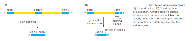 The spliceosome , the splicing code, and pre - mRNA processing in eukaryotic cells Erertt10