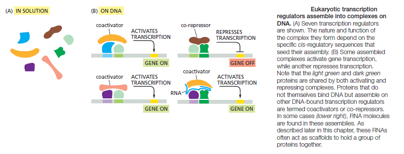Control of Gene Expression, and gene regulatory networks  point to intelligent design Eukary11