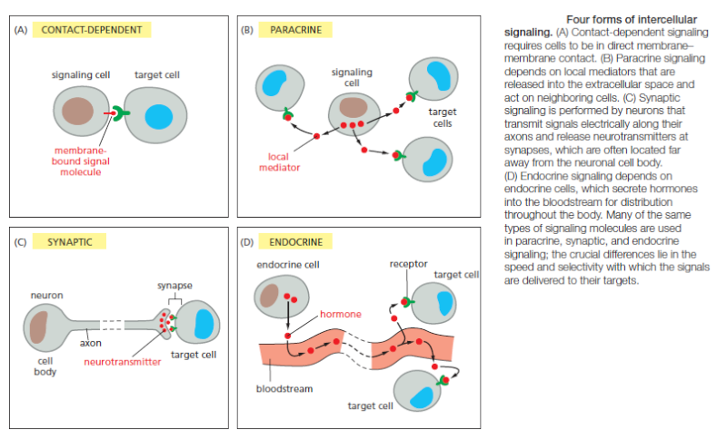 Cell Communication and signaling, evidence of design Forms_10