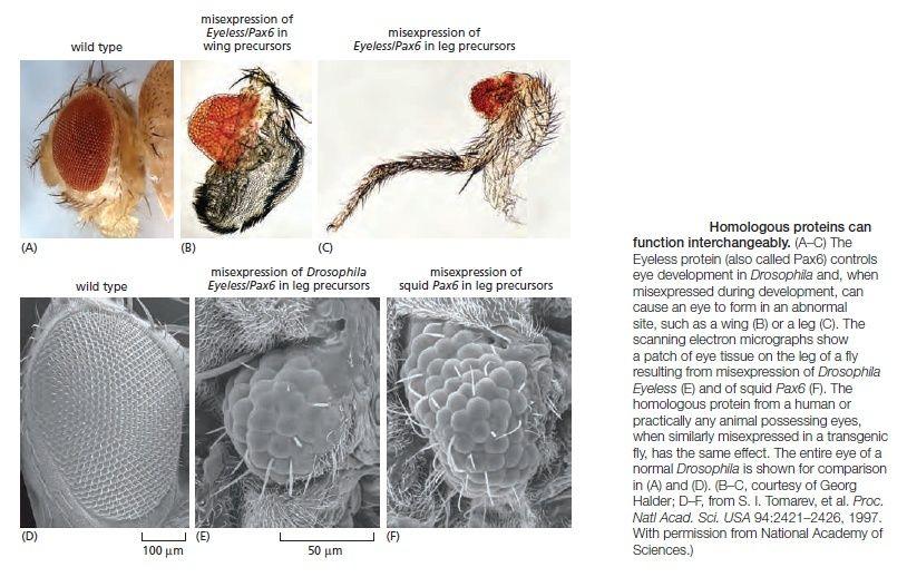 Development of Multicellular Organisms Homolo11