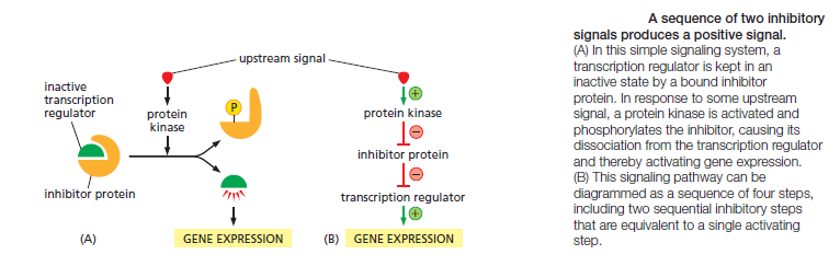 Cell Communication and signaling, evidence of design Inhibi10