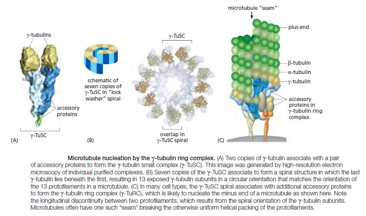 The astonishing  language written on microtubules, amazing evidence of  design Microt10