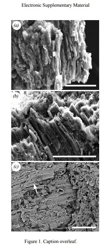 Carbon-14-dated dinosaur bones, non permineralized fossils, and soft tissue like proteins are evidence for young fossils Muscle10