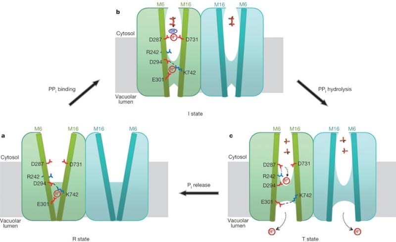 Abiogenesis: LUCA—The Last Universal Common Ancestor Nature10