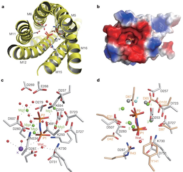 Abiogenesis: LUCA—The Last Universal Common Ancestor Nature11
