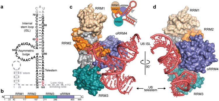 The spliceosome , the splicing code, and pre - mRNA processing in eukaryotic cells Nihms510