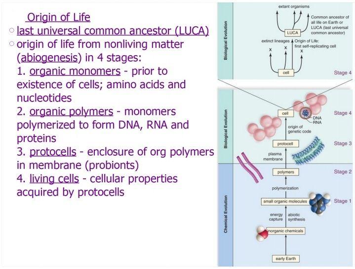 The naturalistic approach of origin of life scenarios Origin10