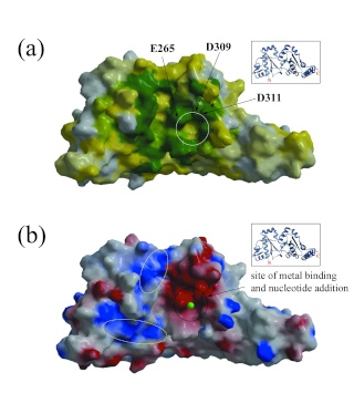 Hexameric helicases some of the most complex machines on Earth P36_fi10