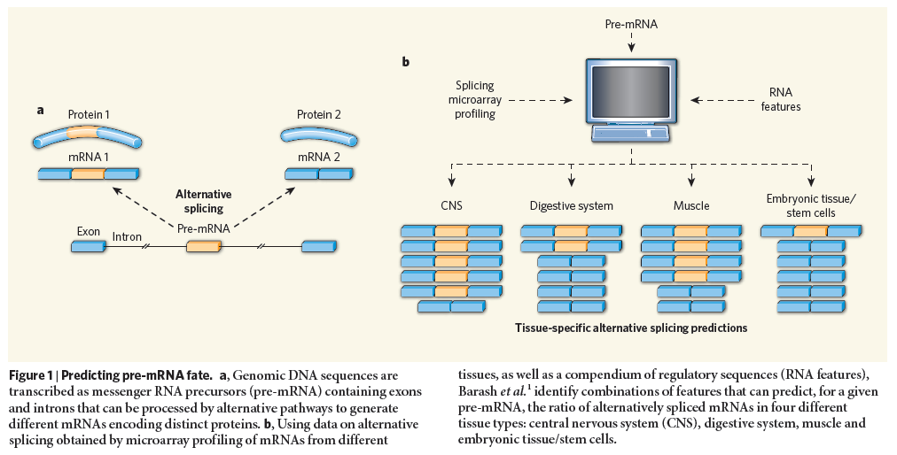 The spliceosome , the splicing code, and pre - mRNA processing in eukaryotic cells Pre_mr11