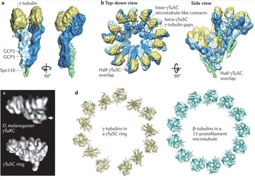 The astonishing  language written on microtubules, amazing evidence of  design Saccha10