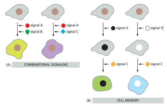 Development of Multicellular Organisms Sdfsdf10