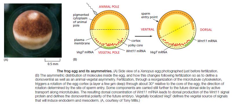 Development of Multicellular Organisms Sem_ty12