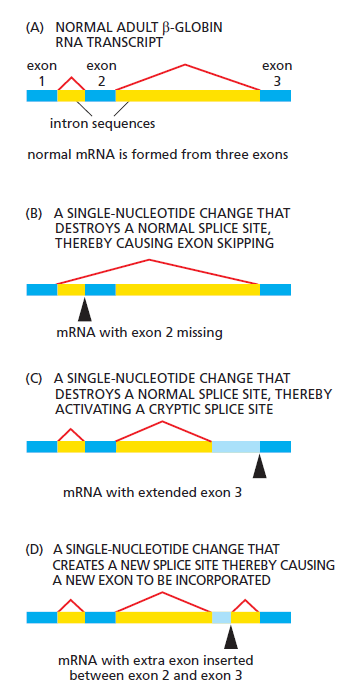 The spliceosome , the splicing code, and pre - mRNA processing in eukaryotic cells Splici10
