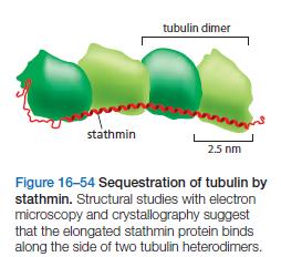 The astonishing  language written on microtubules, amazing evidence of  design Stathm10