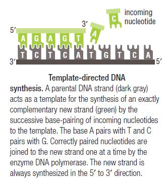 DNA replication of prokaryotes Templa10