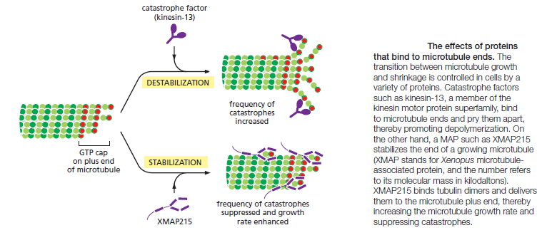 The astonishing  language written on microtubules, amazing evidence of  design The_ef10