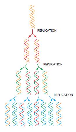 DNA replication of prokaryotes The_se10