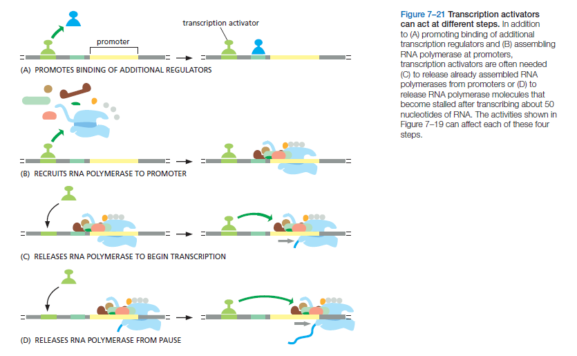 Control of Gene Expression, and gene regulatory networks  point to intelligent design Transc14