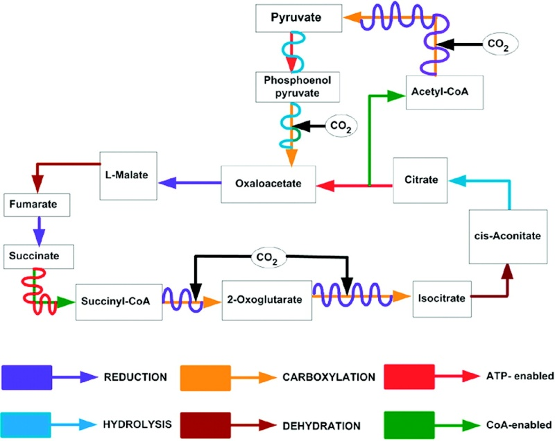Major metabolic pathways and their inadequacy for origin of life proposals Tricar10
