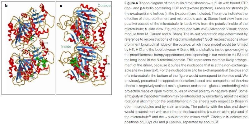 The astonishing  language written on microtubules, amazing evidence of  design Tubuli15