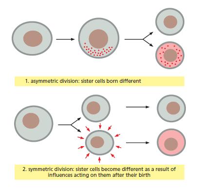 Development of Multicellular Organisms Two_wa11