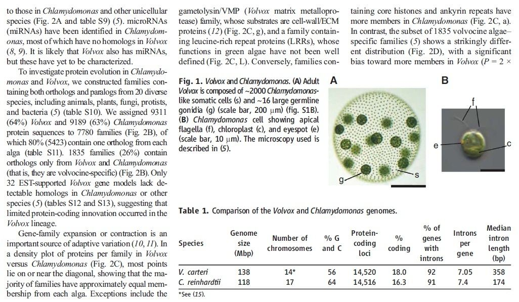Unicellular and multicellular Organisms are best explained through design Volvox11
