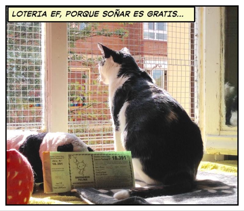 Loteria Navidad Esperanza Felina 2015 04611