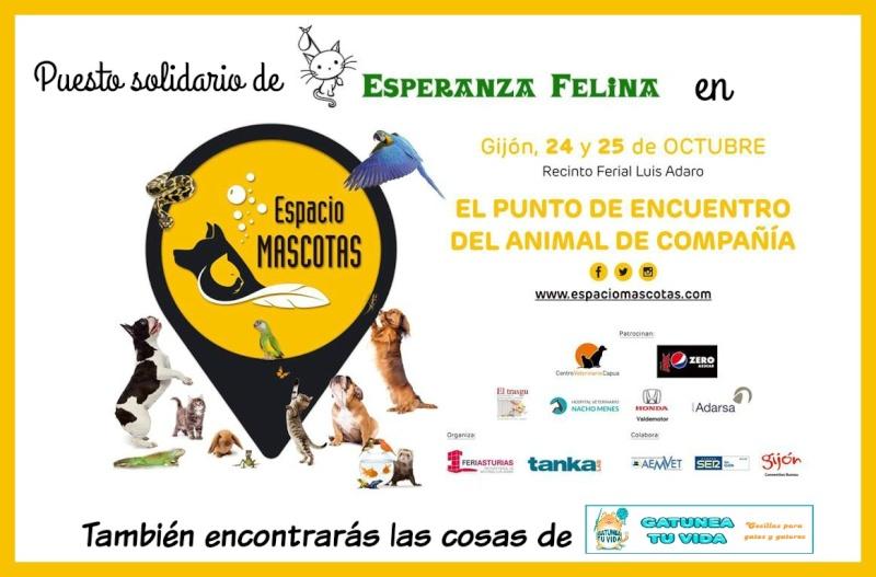 """Puesto de mercadillo de Esperanza Felina en el evento """"Espacio Mascotas"""". 24 y 25 octubre en Gijón 214"""