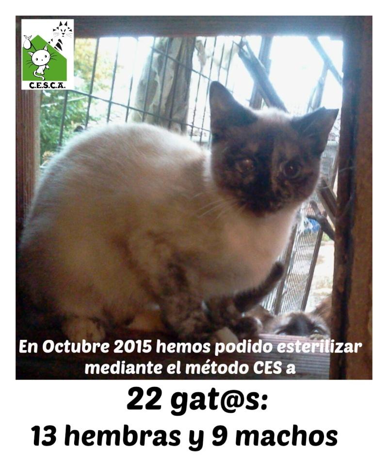CESCA. La unión de Apa Sos Vitoria y Esperanza Felina por los gatos callejeros de Álava - Página 6 Octubr10