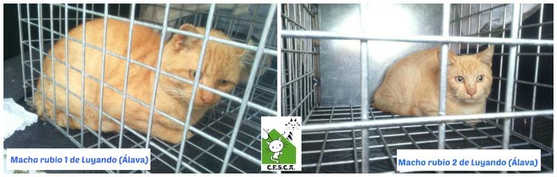 CESCA. La unión de Apa Sos Vitoria y Esperanza Felina por los gatos callejeros de Álava - Página 6 Picmon28