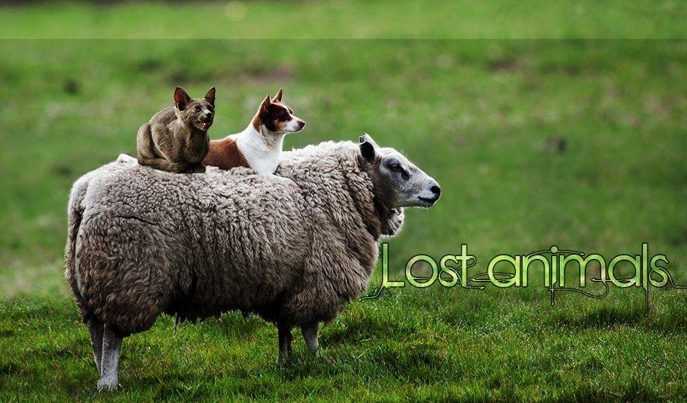 Lost Animals Forum_11