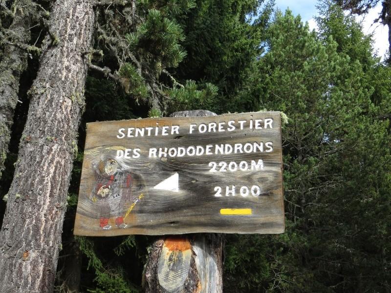 Les Hauts de Puyvalador Img_4221
