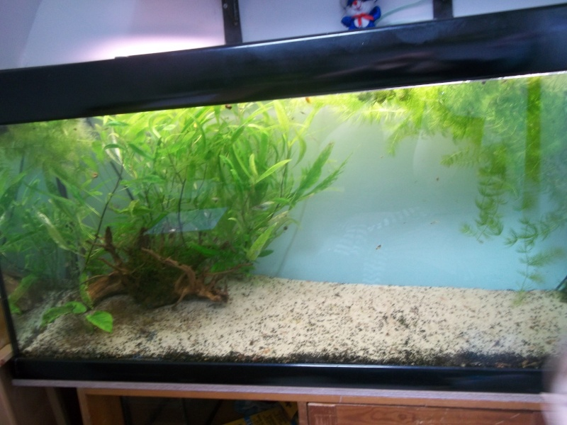 vend aquarium 100_2610