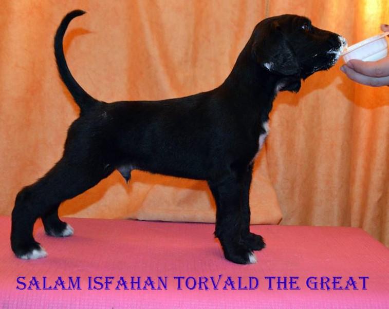 Salam Isfahan  Torvald (Джанга) 11873910