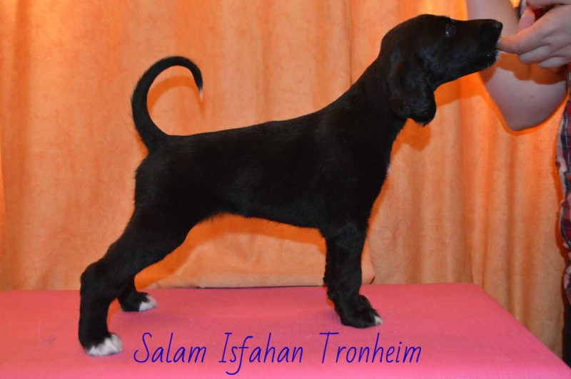 Salam Isfahan  Tronheim 2gf10