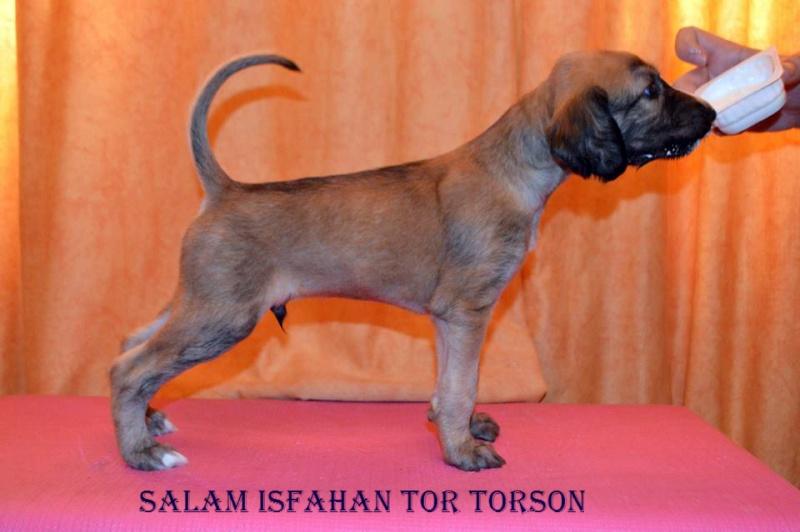 Salam Isfahan  Tor Ae110