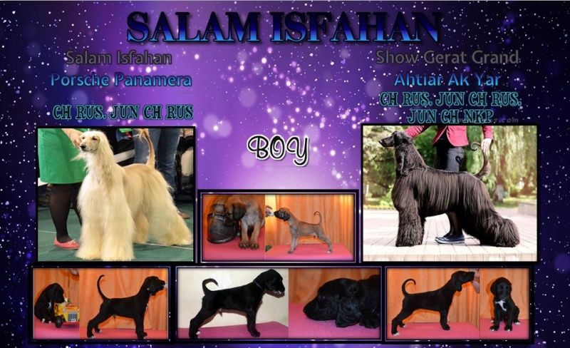 Salam Isfahan  Torvald (Джанга) Ee10