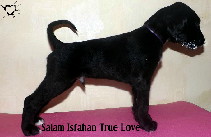 Salam Isfahan  True Love Image10