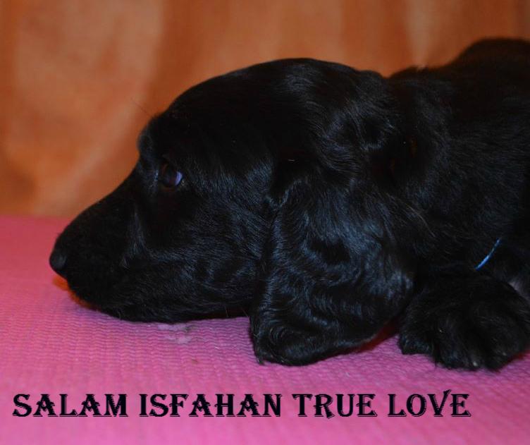 Salam Isfahan  True Love True_l10