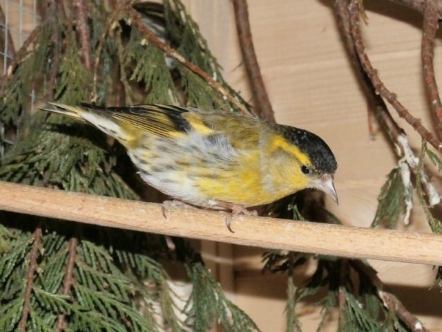 Mes oiseaux 10373112