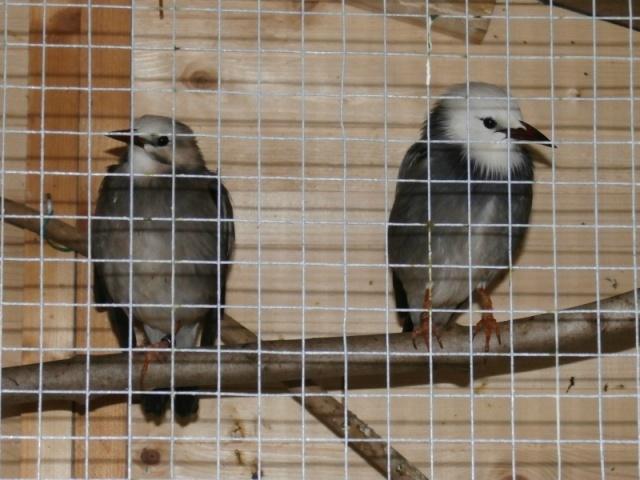 Mes oiseaux 10388810