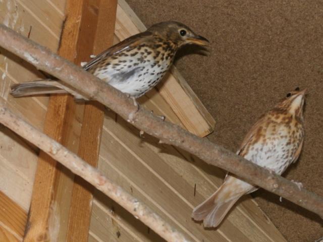 Mes oiseaux 10472110
