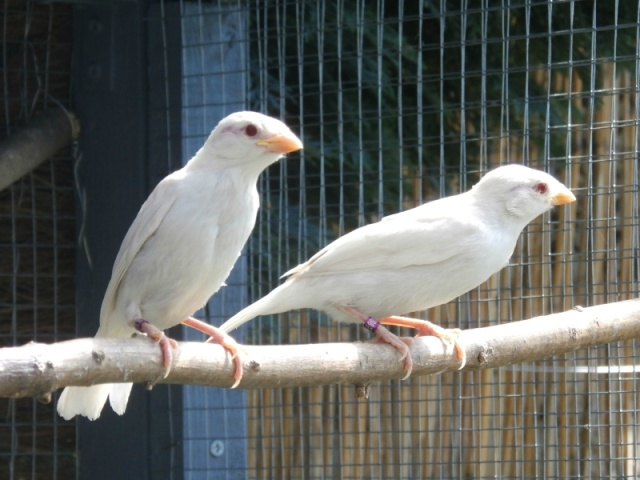 Mes oiseaux 10563211
