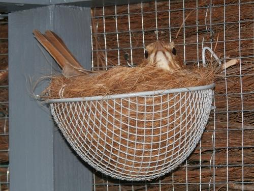 Mes oiseaux 10565710