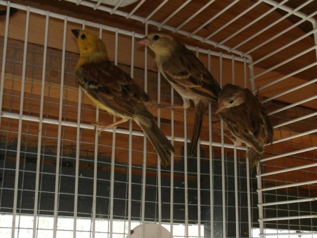 Mes oiseaux 10617010